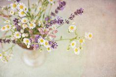 bouquet-fleurs-champs