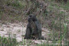 #Landscapes  #Animals #KrugerNationalPark #Kruger #KrugerNP #SouthAfrica #Safari #Travel #Animallove #VisitSouthAfrica