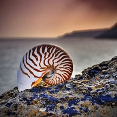 back to the sea by petervanallen, via Flickr