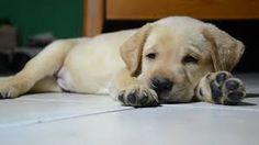 Imagini pentru pupy