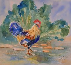 Strut - watercolors by Cady Driver rooster watercolor, chicken