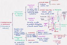Resultado de imagen para transporte de membrana
