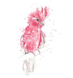 Australian Cockatoo Galah Art Print A3 and A2 by SherylColeArt