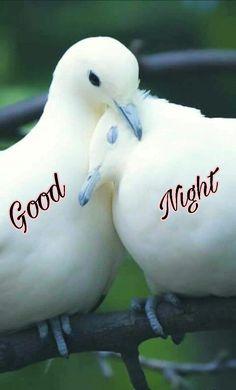 good night images in Hindi best good night images in hindi Good Nyt, Miss U My Love, Romantic Good Night Image, Friendship Quotes In Hindi, Motivational Quotes In Hindi, Wide Awake, Good Night Quotes, Natural Sleep, Love
