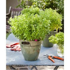 Herbs Bonnie Plants Grow herbs for fresh flavor in the kitchen and for beauty, fragrance, and beneficial effects in the garden.