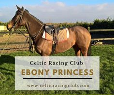 Ebony Princess, having 4 career runs and all with credit, is waiting for her next race. Hope to see some potential from the run but it is her first start in nearly 2 years. Racing News, Racehorse, Waiting For Her, Thoroughbred, Horse Racing, Celtic, Career, Horses, Club