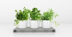 Bring the benefits of an herb garden indoors with the timeless beauty of U-Herb. Being unveiled at #MOAMERICAS15