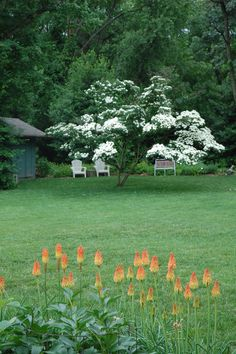 Cornus kousa Spring Tree, Tree Shapes, Flower Seeds, Trees To Plant, Perennials, Stepping Stones, Colours, Outdoor Decor, Flowers
