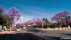 Static timelapse at busy traffic intersection, Pretoria CBD, city of Thswane. South Africa, early morning scenic with Jacaranda trees in bloom 25p. #TLSA #wedoallthingstimelapse #stock #stockfootage #timelapse #southafrica Jacaranda Trees, City Scene, Pretoria, Early Morning, Stock Video, High Quality Images, Stock Footage, South Africa, Adobe