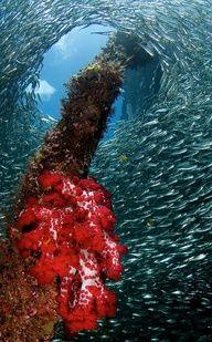 """Raja Ampat Underwater"" - Papua - Indonesia - #travel #travelphotography #travelinspiration #indonesia #YLP100BestOf #wanderlust"
