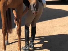 Teaching Your Horse to Stretch