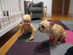 baby french bulldog costume. the end. @Christine Ballisty Wilson  Um...wouldn't Harlen be so cute dressed as MONGO?!?!?