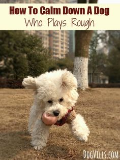How To Calm Down A Dog Who Plays Rough: Wondering how to calm down a dog who plays rough without completely squashing her excitement and spirit? Check out our tips to keep playtime fun and calmer.