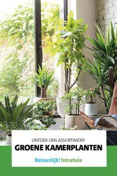 Een ruim assortiment aan groene kamerplanten vind je bij Intratuin; laat je inspireren op onze site of bekijk het assortiment in één van onze winkels. Modern Garden Design, Garden Care, Houseplants, Dubai, Beauty, Beleza, Garden Maintenance, House Plants