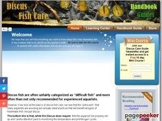 """Discus Fish Care Handbook - http://positivelifemagazine.com/discus-fish-care-handbook/ http://pagepeeker.com/t/l/discus-fish-care-guide.com%2fsp%2f *Today Special Deal*  Discus Fish Care Handbook     *Today Special Deal*  Interested? Click here to learn more!    Please follow and like us:  var addthis_config =   url: """""""",  title: """""""""""