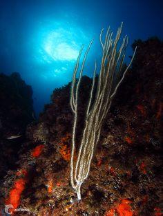 The Sun underwater - Costa Brava - Spain