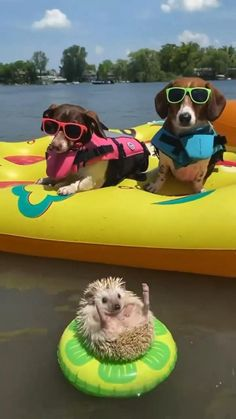 Baby Animals Super Cute, Cute Wild Animals, Cute Baby Dogs, Baby Animals Pictures, Cute Funny Dogs, Cute Animal Photos, Cute Animal Videos, Cute Little Animals, Funny Animal Pictures