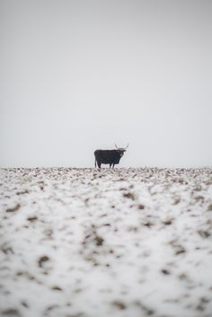 Last Days of Winter by Kathrin Loges und Jan Wunderlich , via Behance