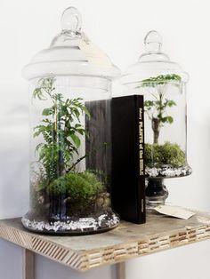 The Urban Grow. Terrarium//
