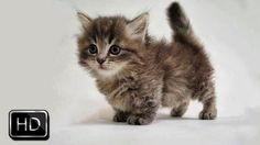 Fluffy Kittens Cutely Playing | Too Cute!