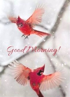 Winter Birds Good Morning Quote good morning good morning quotes winter good morning quotes good morning quotes for friends best good morning quotes new day quotes