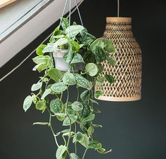 indoor hanging plants The nicest hanging plants for your interior - indoor hanging plants The nicest hanging plants for your interior - Diy Hanging, Hanging Plants, Indoor Plants, Wedding Reception Music, Living Room Plants, Living Spaces, New Home Designs, Home Living, Houseplants
