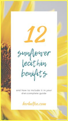 12 sunflower lecithin benifits and how to include it in your diet:complete guide. Sunflower Lecithin Benefits, Plant Tissue, Good Healthy Recipes, Healthy Food, Tazo, Greek Words, Home Remedies, Nutrition, Diet