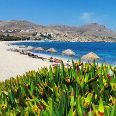Kalafatis Beach in Mykonos, Greece.. #mykonos #greece #kalafatis #travel #beach #shade #mediterranian #coastline #kalafatisbeach #colourful #contrast #sunshine #ilovegreece #bluesky