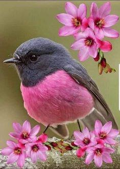 Happy B Day, Beautiful Birds, Animals, Dreams, Twitter, Fennec Fox, Happy Brithday, Happy Birthday, Animales