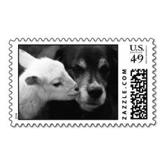==>>Big Save on          	A Lamb's Kiss Stamp           	A Lamb's Kiss Stamp you will get best price offer lowest prices or diccount couponeDeals          	A Lamb's Kiss Stamp Review from Associated Store with this Deal...Cleck Hot Deals >>> http://www.zazzle.com/a_lambs_kiss_stamp-172595379269145973?rf=238627982471231924&zbar=1&tc=terrest