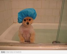 Perfect way to keep water out of dog ears, a shower cap. Why haven't I ever thought of this before?