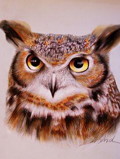 DeviantArt: More Like Little owl feeling cold in the snow by ArtofOkan