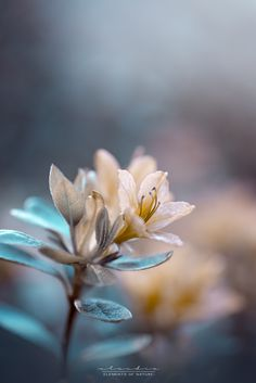 © Elements of Nature by Claudia Samples