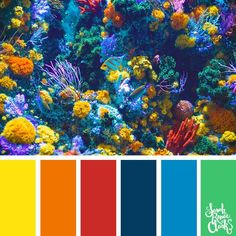 Take a dive under the sea with these beautiful color combinations inspired by ocean life and Living Coral - PANTONE's 2019 Color of the Year. Beach Color Palettes, Coral Colour Palette, Color Schemes Colour Palettes, Color Palate, Color Trends, Tropical Colors, Bold Colors, Tropical Fish, Coral Reef Color