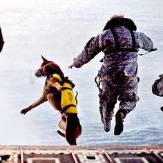 A tribute to man's best friend fighting alongside our troops. http://www.pinterest.com/petmoods/dogs-of-war-americas-forgotten-heroes/
