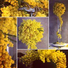 Février 2017 Sophie Blanc EVENT DESIGN Aix en Provence, composition florale mimosas , floral design Aix En Provence, Mimosas, Wedding Flowers, Vegetables, Design, Party, Floral Arrangement, Flowers, Trends