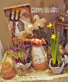 chippy shabby, Spring