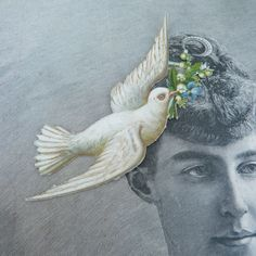 Vintage 1900 scrap die cut  dove