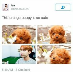 Yes, he is. I almost mistook these puppies for J-Hope from BTS