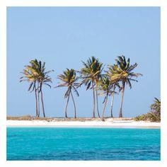 """Beautiful morning on Mayreau Island. #palms #beach"" Photo taken by @pinkhousemustique on Instagram, pinned via the InstaPin iOS App! http://www.instapinapp.com (03/30/2015)"