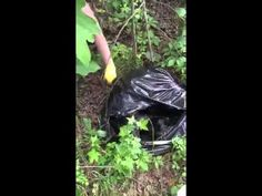 Discarded puppies rescued from trash bag in Barbour County - YouTube