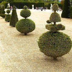 Jo-Alderson-Design-knot-garden-within-walled-garden.Versailles-topiary-21.jpg (749×749)