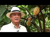 Research Innova Cocoa Chocolate Network: ¡¡ MANDAMIENTO 1°: No mezclarás ¡¡ - ¡¡ You will n...