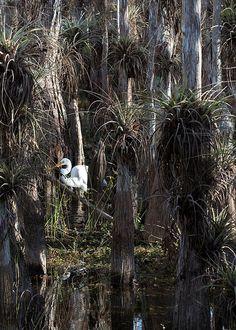 Big Cypress National Preserve - Florida