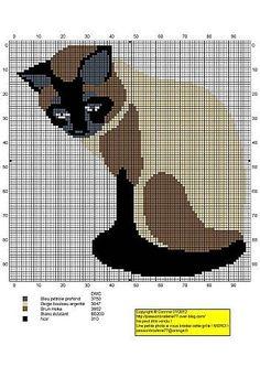 Siamese kitty. Beautiful.: