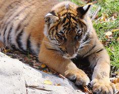 animal card     http://www.timemart.vn/  http://www.timemart.vn/305/p/320744/am-sieu-toc.html  http://www.timemart.vn/305/pr/335415/808/am-sieu-toc-panasonic-1-8l.html