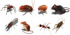 We're not talking about your noisy neighbor or your annoying uncle Fred.  These are tips to keep those pesky pests and insects out of your home.  You know all the pests you love to hate like roaches, ants, spiders, crickets, scorpions and mice.   Here are 10 great tips to help prevent pests from ever entering your home: