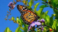 Wallpaper butterfly, wings, patterns, plant