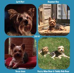 National Dog day, Aug 26 2016, Established 2004