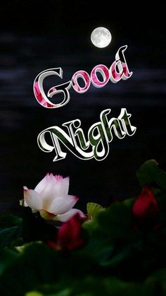 I see you tomorrow. Good Night Flowers, Beautiful Good Night Images, Good Night I Love You, Good Night Friends, Good Night Gif, Good Night Wishes, Good Night Sweet Dreams, Funny Good Night Quotes, Good Night Messages